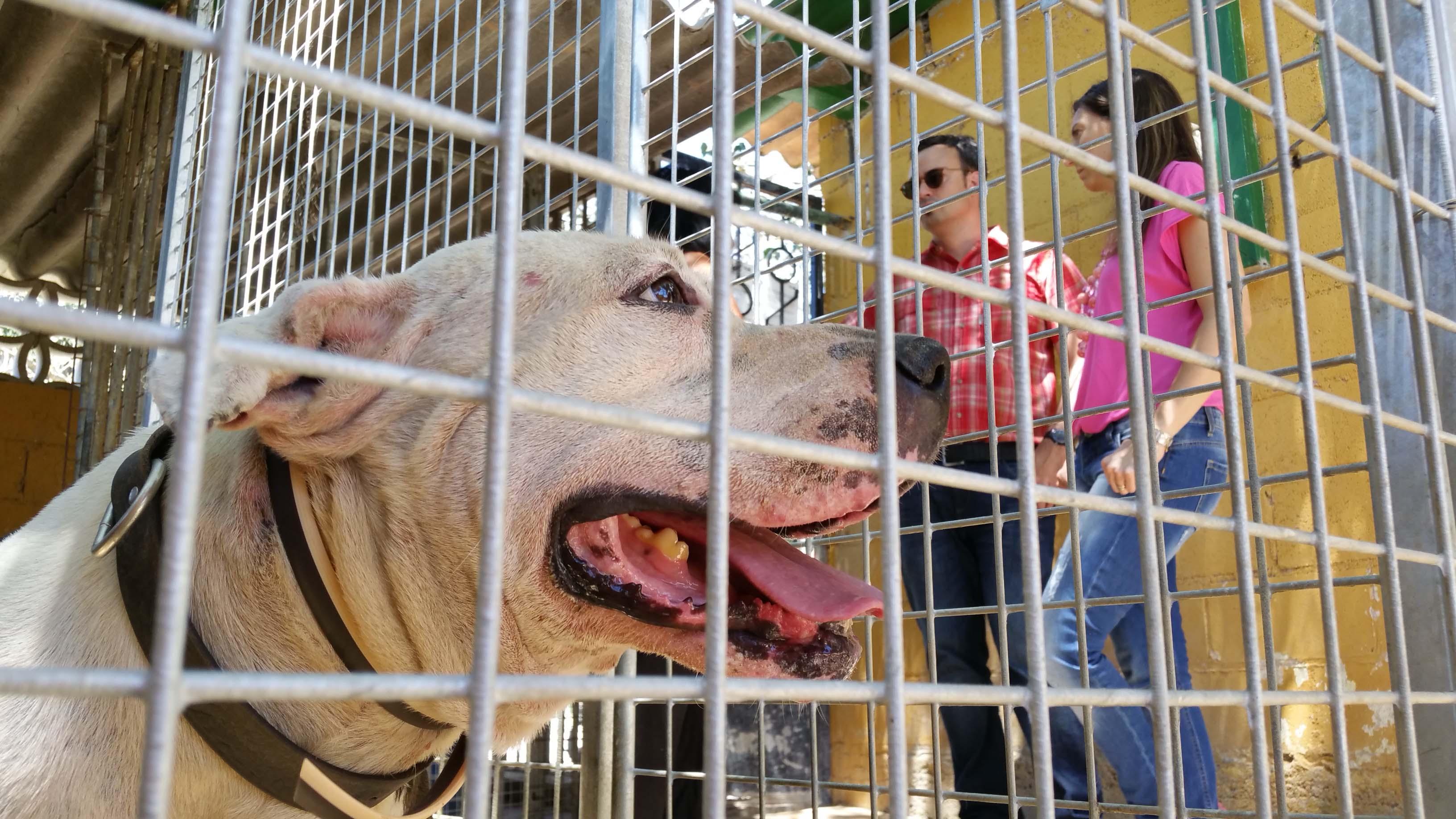 Josep Coma visita la Protectora d'animals d'Osona