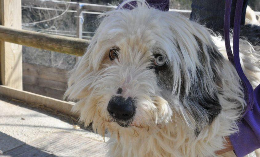 recurs gos refugi ripollès 2018