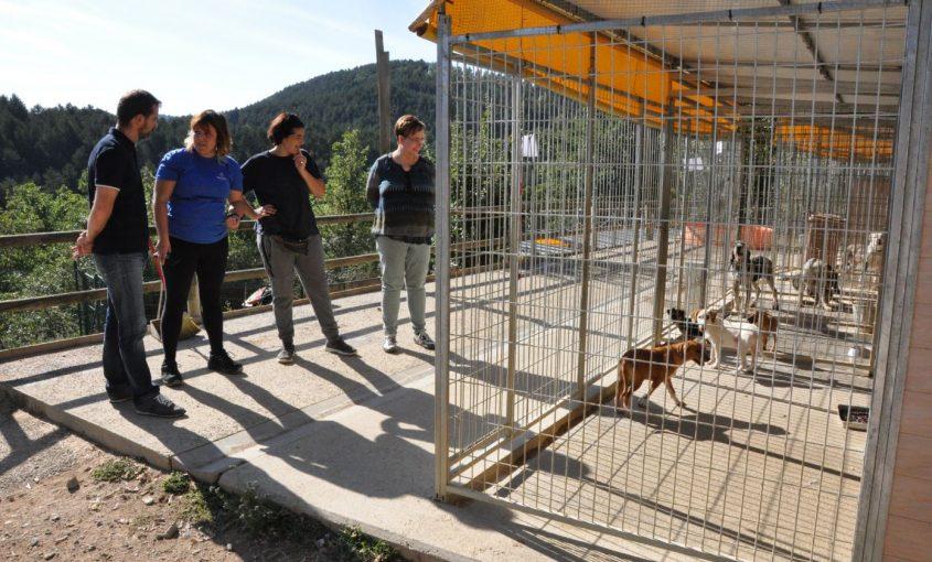 Refugi d'animals del Ripollès. Adopció de gossos.